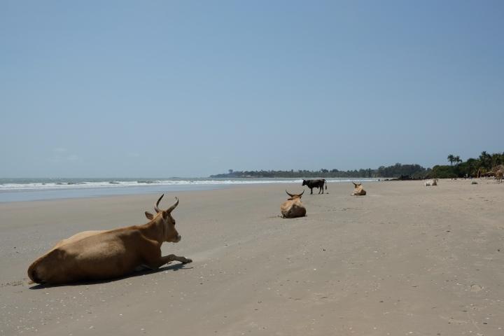 Senegal Part 3: Casamanceregion